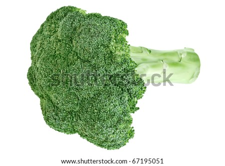 Fresh green broccoli cabbage head with stalk isolated on white - stock photo