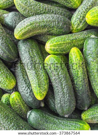 Fresh green cucumbers from the summer garden. Cucumbers background.
