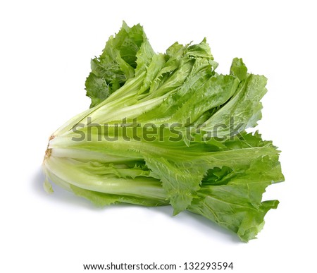 Fresh green endive on white background.