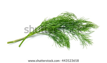 Fresh green fennel isolated on a white background - stock photo