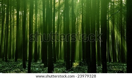 Fresh green forest - stock photo