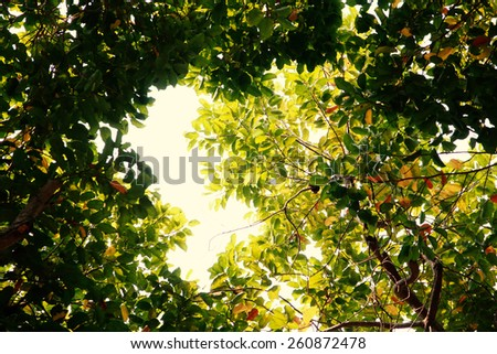 Fresh green forest, angle view. - stock photo