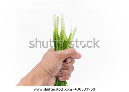 fresh green Garlic chives vegetable in hand on white background chives leaves (leek) isolated on pure white with copy space  - stock photo