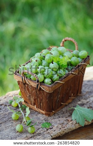 Fresh green gooseberries in a wooden basket outdoor - stock photo