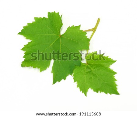 Fresh Green Grape Leaf  isolated on white Background