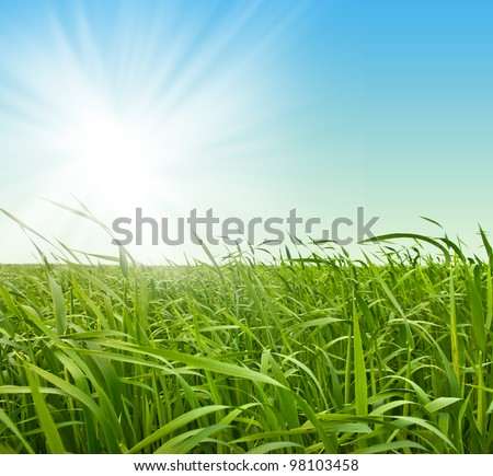 Fresh green grass against the sky - stock photo