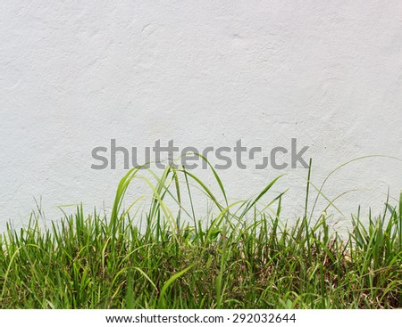 fresh green grass against white stucco wall with copy space - stock photo