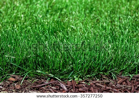 Fresh green grass as a background. - stock photo