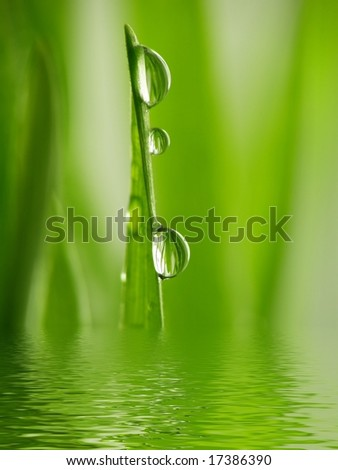 Fresh Green grass as a background with summer sun light and water drops reflected in water