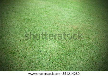 Fresh green grass background and texture at the nature outdoor - stock photo