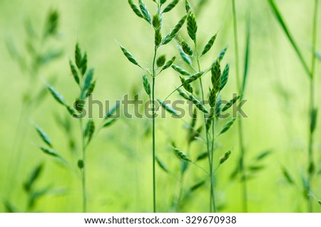 Fresh green grass background.Selective focus. - stock photo