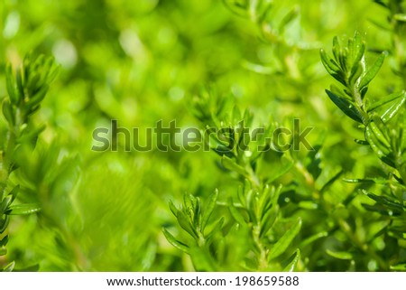 fresh green grass  background with shallow DoF - stock photo