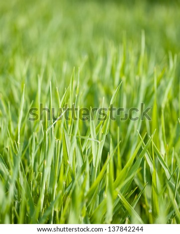 Fresh green grass backgrounds with selective focus