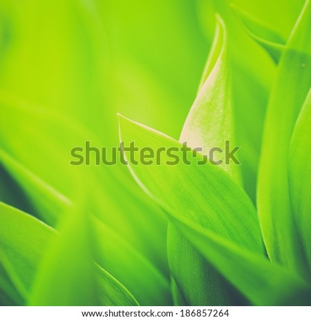 Fresh green grass close-up - stock photo