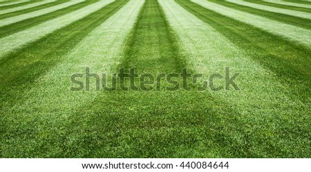 fresh green grass,football field,soccer field,field background for sports
