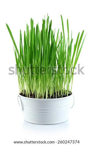 Fresh green grass in small metal bucket, isolated on white