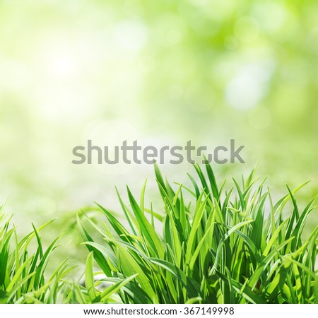 Fresh green grass in sunny day. Blurred bokeh on background - stock photo