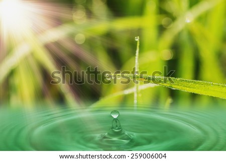 Fresh green  grass leaves with dew drops and sunlight - stock photo