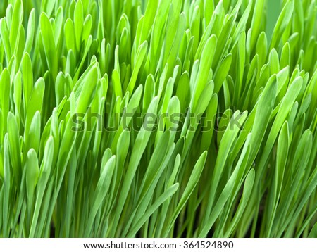 Fresh green grass. Nature background.
