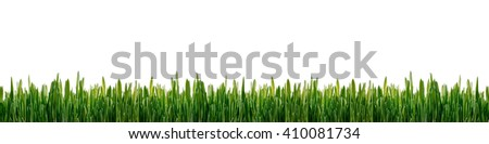 Fresh green grass panorama isolated on white background. Green grass isolated pattern for banner, decoration, advertising. Concept of environmental conservation, growth, spring, freshness, wild nature - stock photo