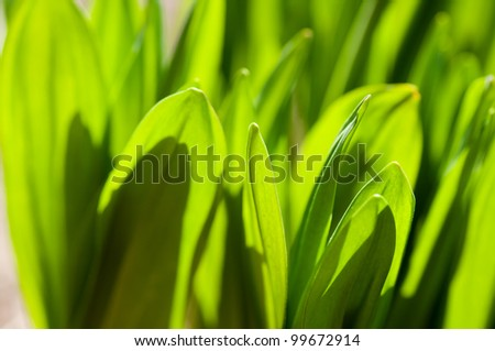 Fresh green grass (shallow DOF) - stock photo