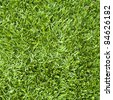 Fresh green grass texture - stock photo