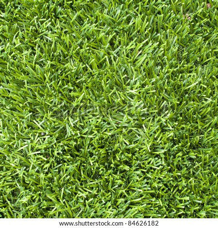 Fresh green grass texture - stock photo