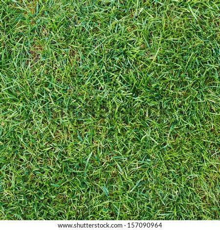 Fresh green grass texture as abstract background composition