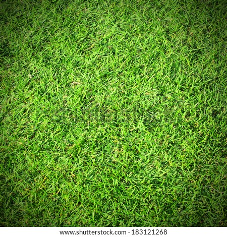 Fresh green grass top view with for background - stock photo