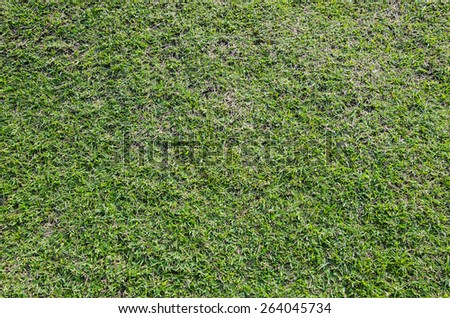 fresh green grass turf field in the garden texture background