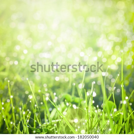 Fresh green grass with dew - stock photo