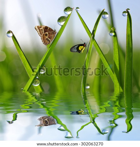 Fresh green grass with dew drops and butterflies. Natural background. - stock photo
