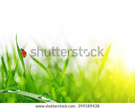 Fresh green grass with dew drops and ladybug closeup. Soft Focus. Nature Background - stock photo
