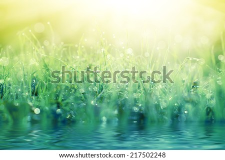 Fresh green grass with dew drops close up, natural background - stock photo