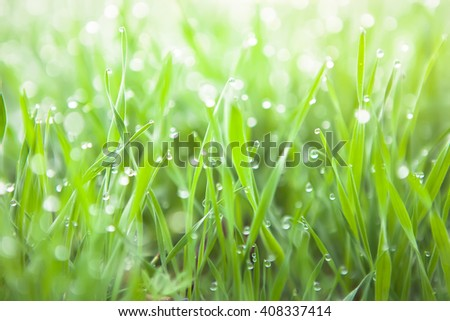 Fresh green grass with dew drops closeup. - stock photo