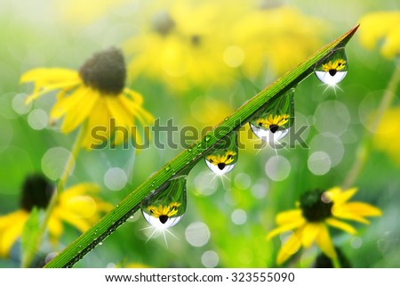 Fresh green grass with dew drops closeup. Nature Background. - stock photo