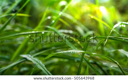 Fresh green grass with dew drops closeup. Nature Background (Select focus)
