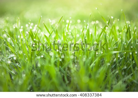 Fresh green grass with dew drops. Nature Background - stock photo