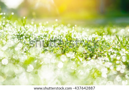Fresh green grass with water drops and day light.