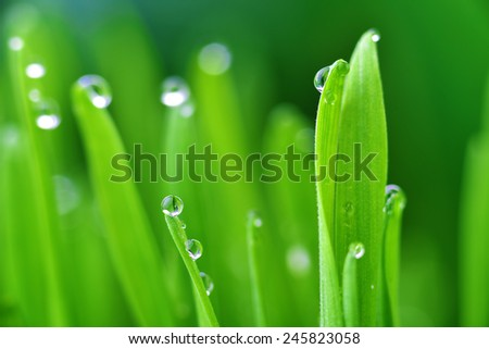 fresh green grass with water drops close up - stock photo