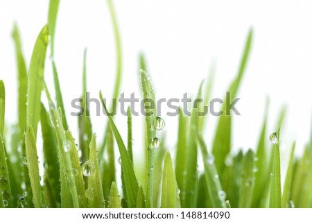 Fresh green grass with water drops isolated on white with copy space - stock photo