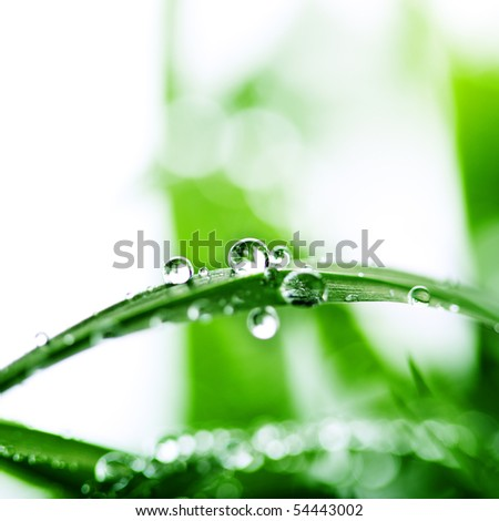 Fresh green grass with water drops(Shallow Dof)