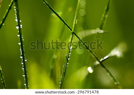 fresh green grass with waterdrops. natural summer background with soft focus - stock photo