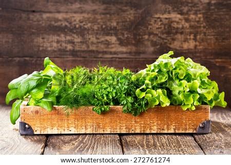 fresh green herbs in wooden box - stock photo