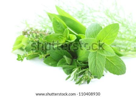 Fresh green herbs on white background - stock photo
