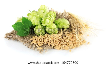 Fresh green hops and barley, isolated on white - stock photo