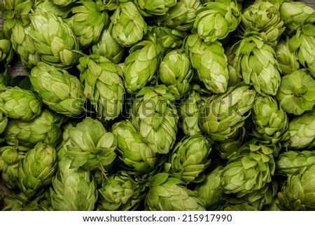 Fresh green hops on a wooden table - stock photo