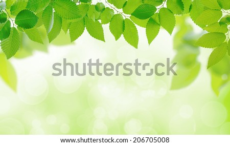 Fresh green image