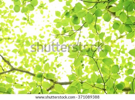 Fresh green image - stock photo