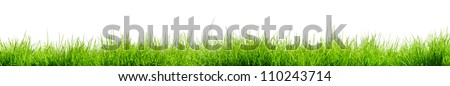 Fresh green isolated grass - stock photo